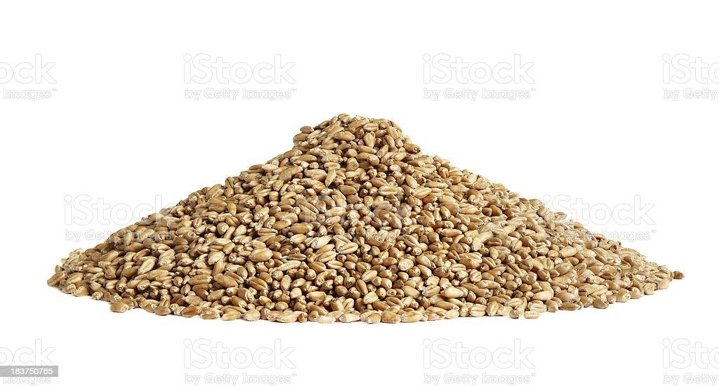 Wheat grain royalty-free stock photo