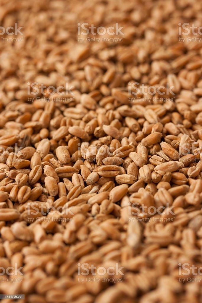 Fondo de granos de trigo foto de stock libre de derechos