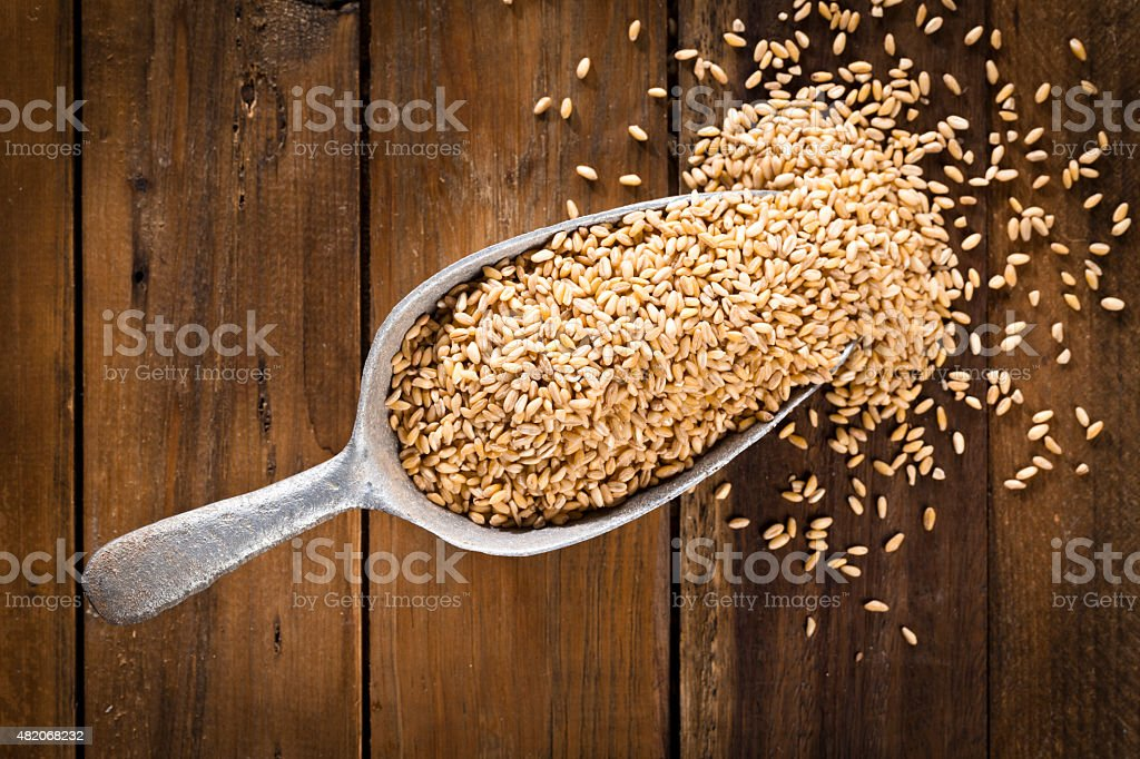 Wheat grains in a scoop shot directly above stock photo