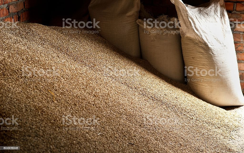 Wheat grains in sacks at mill storage stock photo