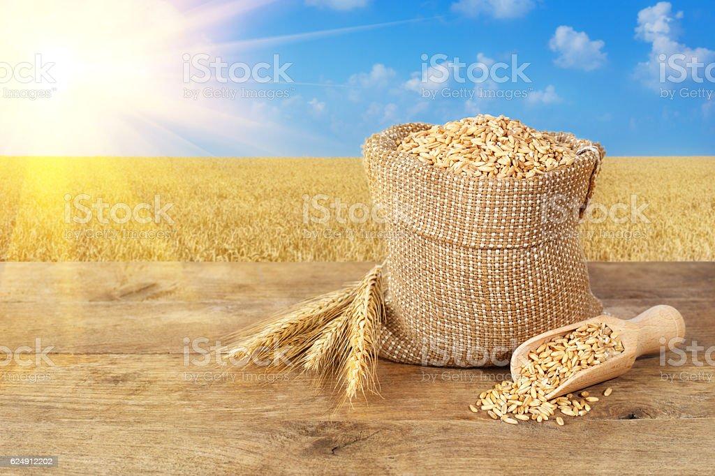 wheat grains on wheat field background stock photo