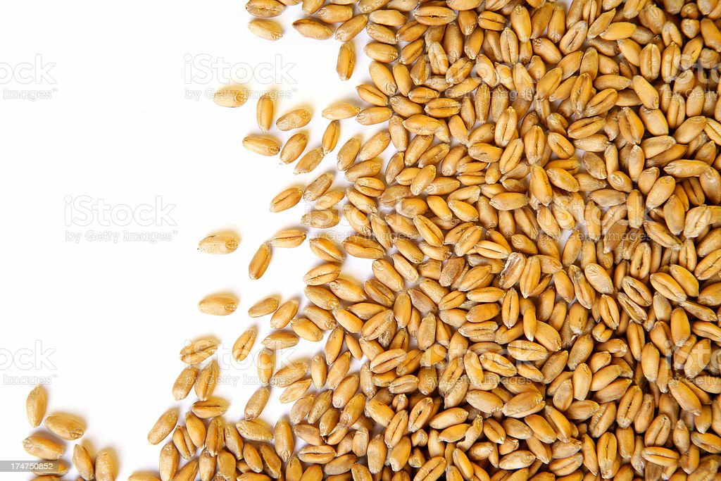 Wheat grains on white with copyspace stock photo