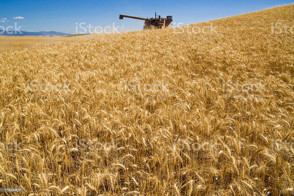 wheat harvest and combine near Spokane Washington royalty-free stock photo