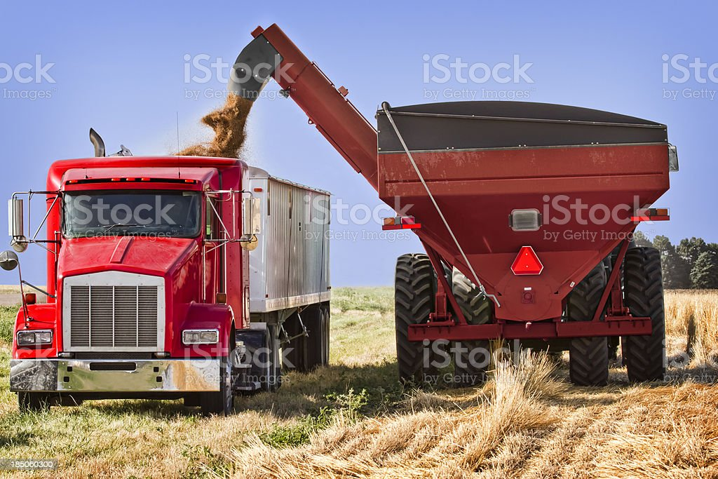 Wheat Harvest, Being Transfered Grain Cart to Truck. stock photo
