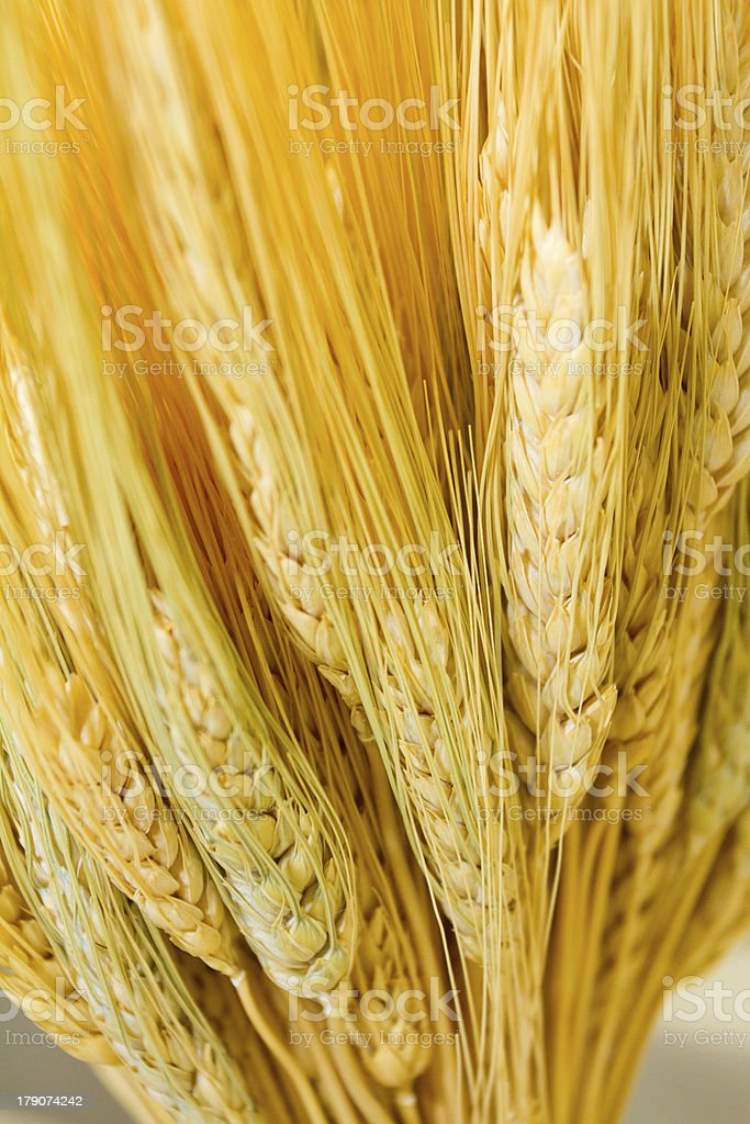 Wheat Harvest Bundle royalty-free stock photo