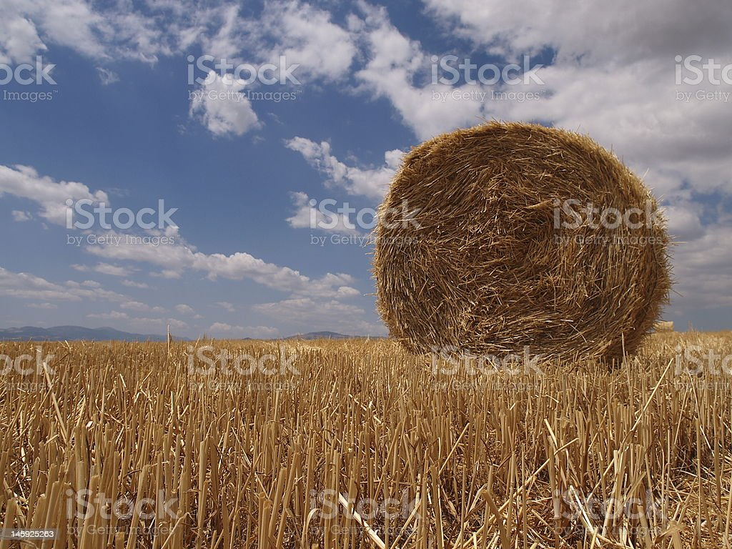 wheat harvest royalty-free stock photo