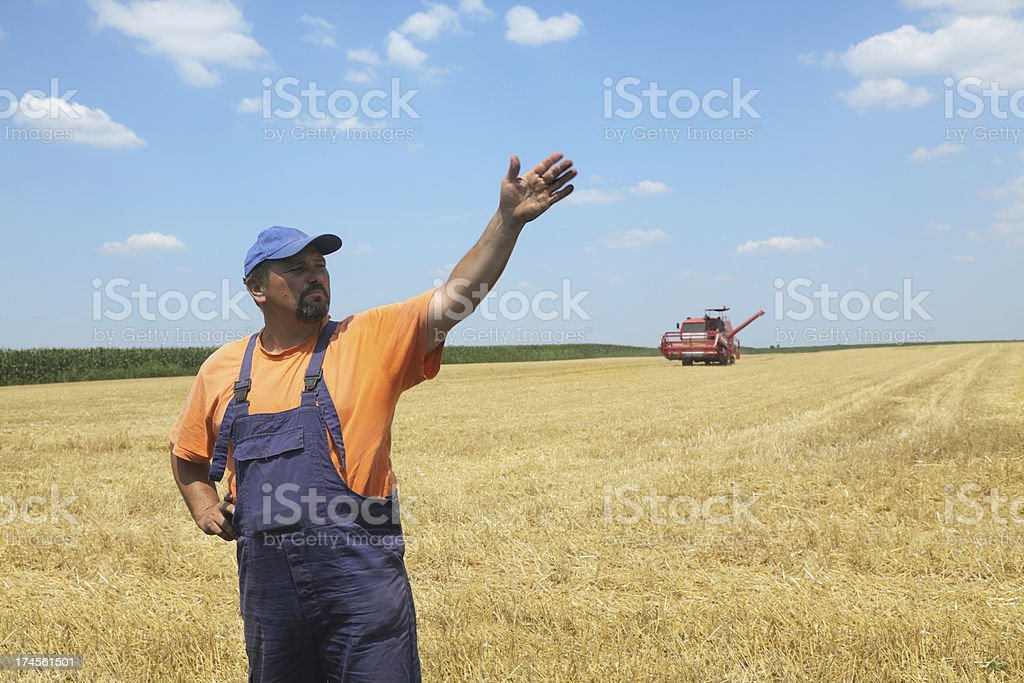 Wheat harvest royalty-free stock photo