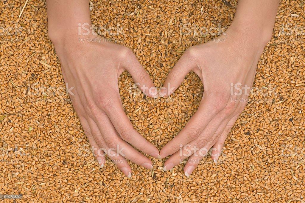 Wheat heart royalty-free stock photo