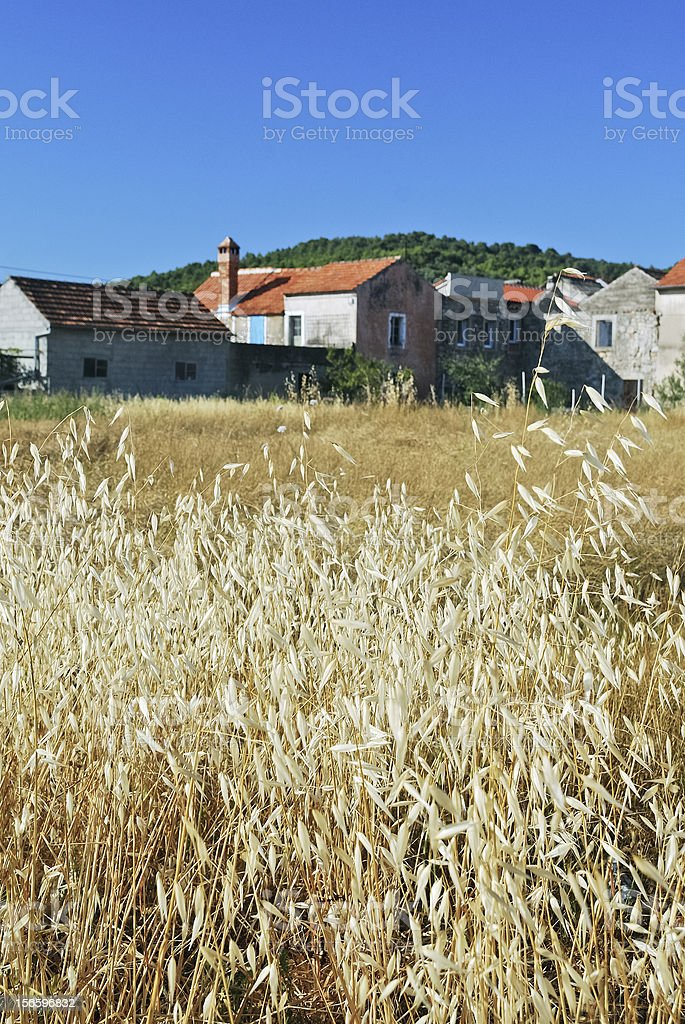 Wheat in front of a village royalty-free stock photo