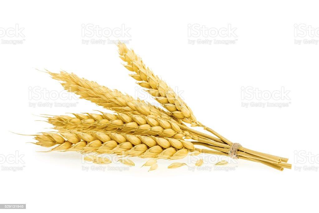 Wheat isolated on white stock photo