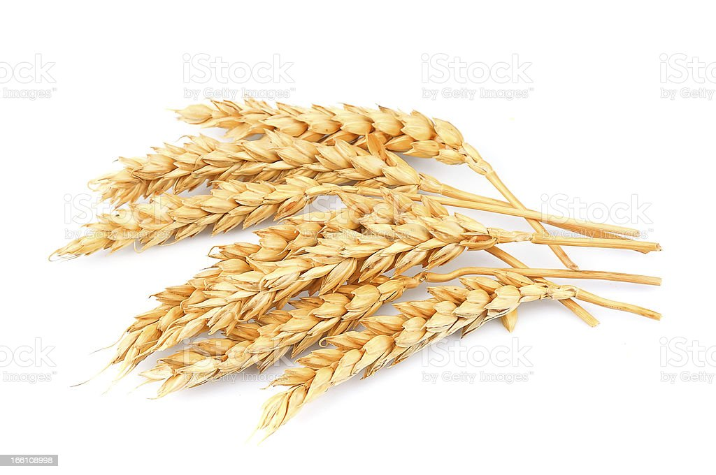 wheat isolated royalty-free stock photo