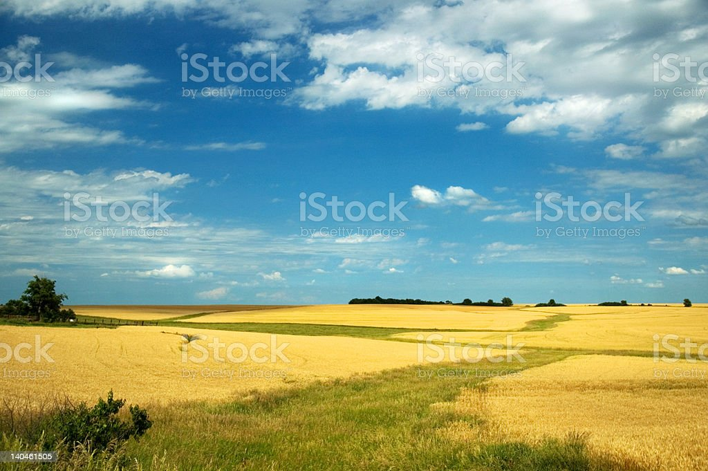 Wheat Landscape royalty-free stock photo