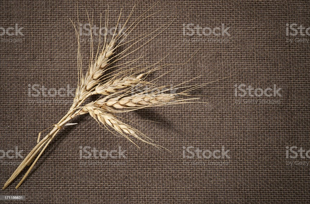 Wheat on a burlap background. royalty-free stock photo