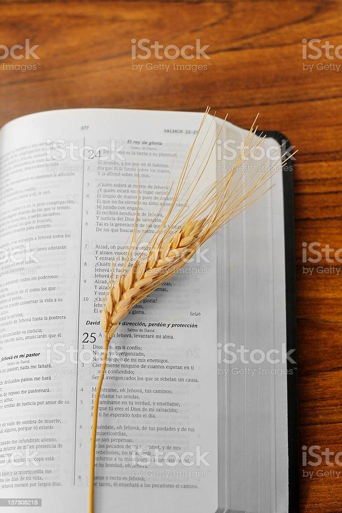 Wheat on bible stock photo
