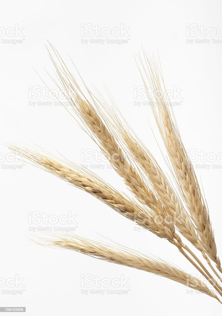 Wheat on white background stock photo