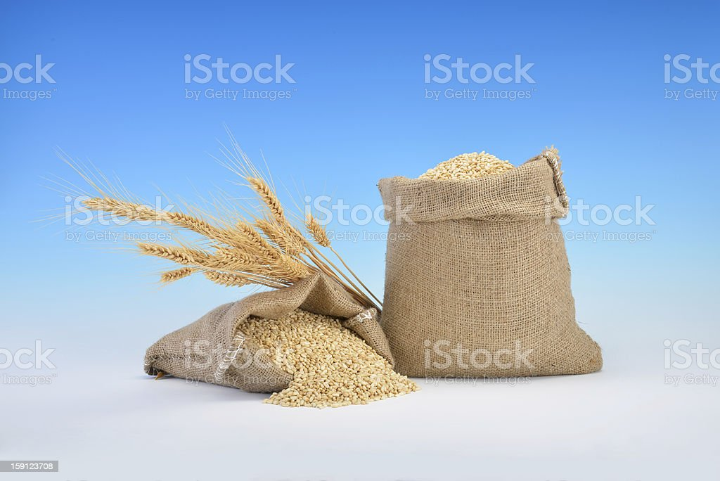 Wheat over blue background royalty-free stock photo