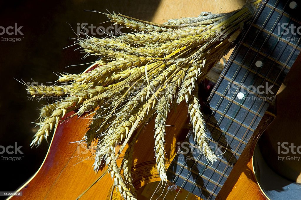 Wheat over guitar stock photo