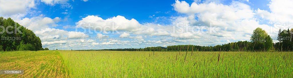 Wheat panorama royalty-free stock photo