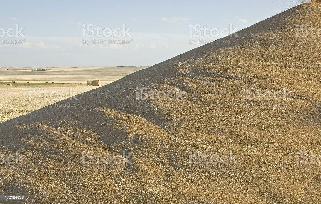 Wheat pile royalty-free stock photo
