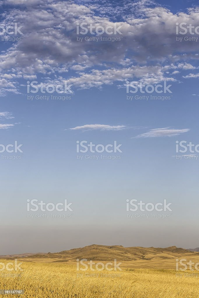 Wheat plant royalty-free stock photo