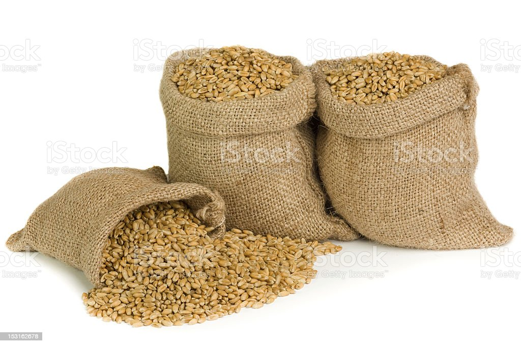 Wheat seed royalty-free stock photo