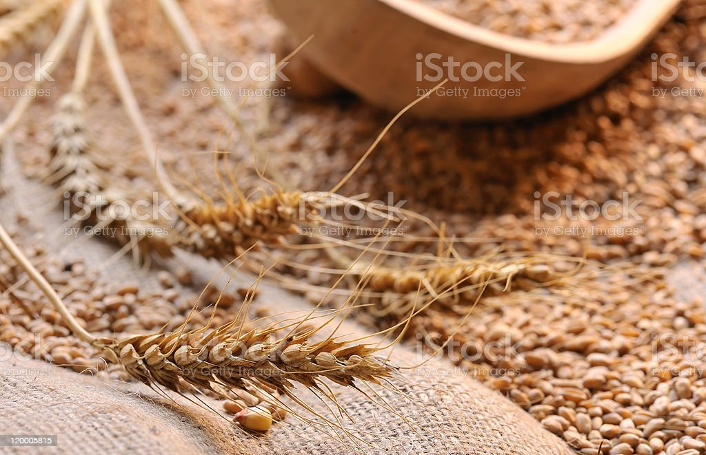 wheat seeds on rough material stock photo