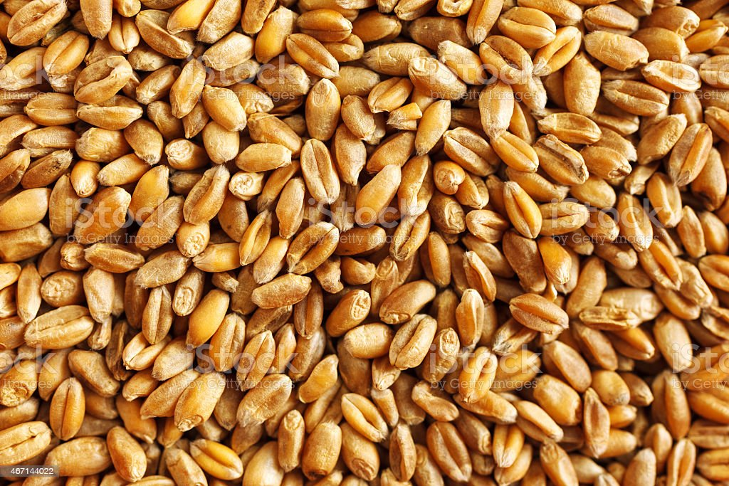 Wheat seeds stock photo