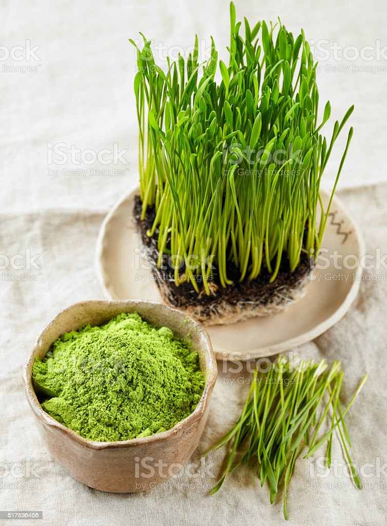Wheat sprout powder stock photo