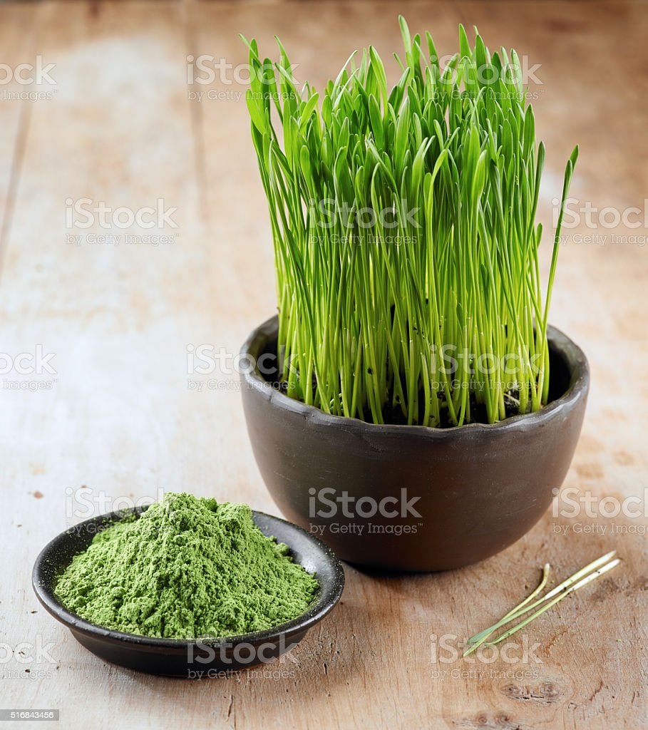 wheat sprouts and powder stock photo