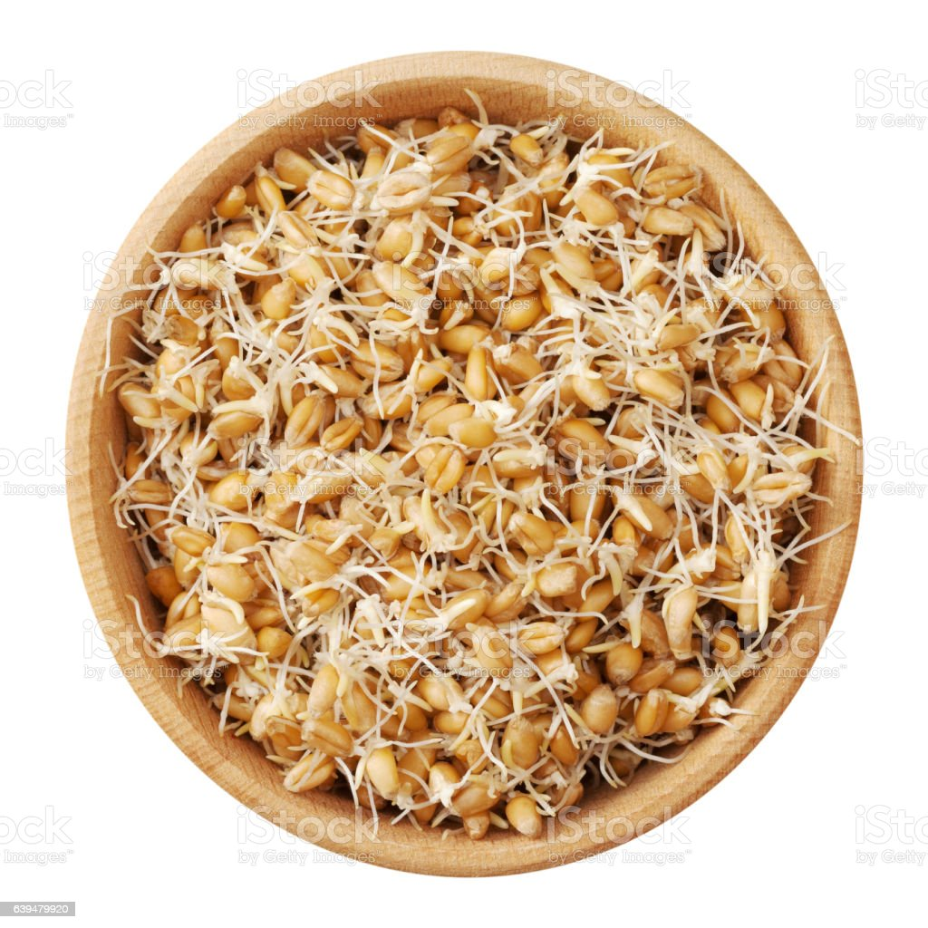 Wheat sprouts in wooden bowl, isolated on white. stock photo