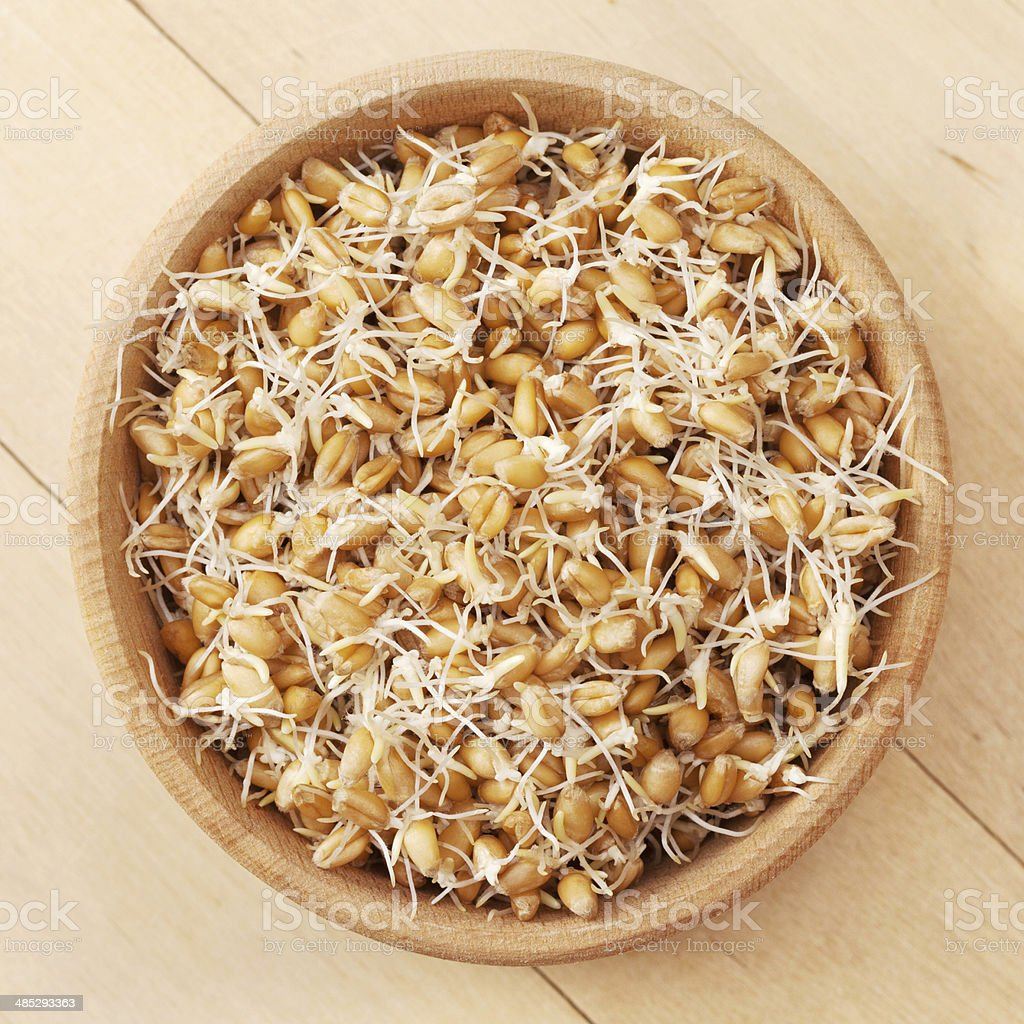wheat sprouts in wooden bowl royalty-free stock photo