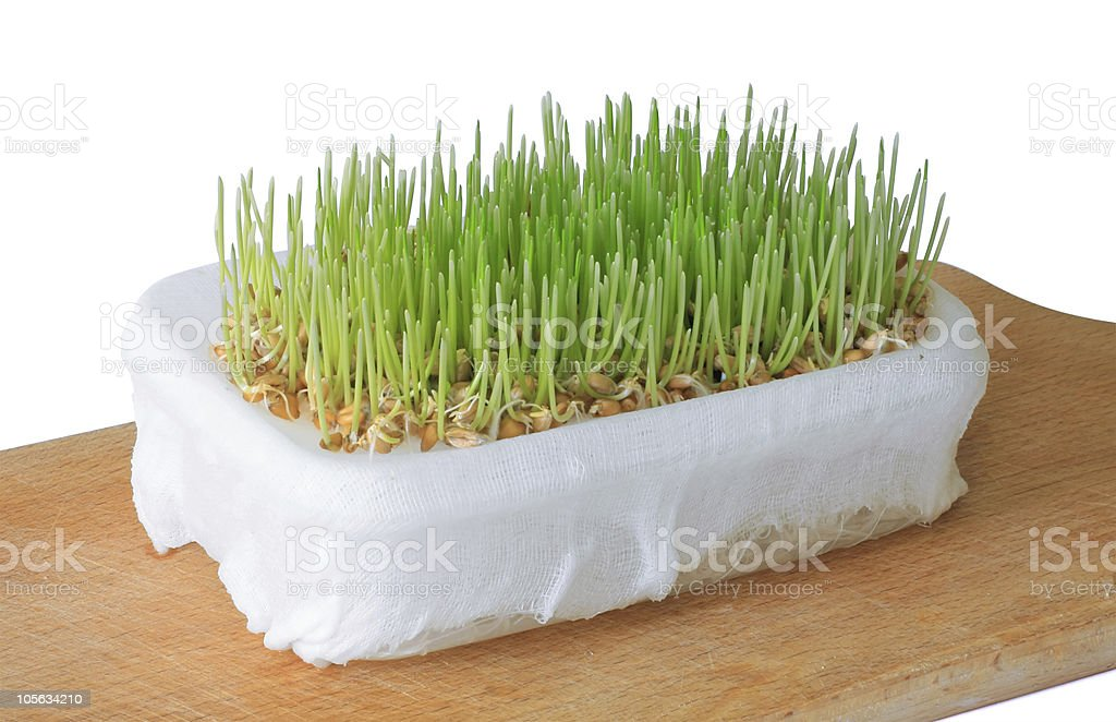 Wheat Sprouts with clipping path royalty-free stock photo