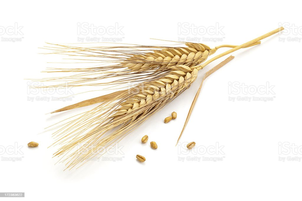 Wheat stems. stock photo