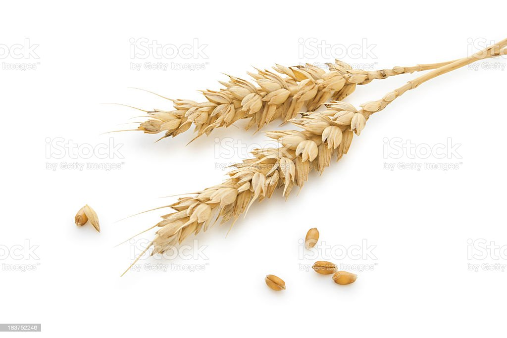 Wheat stems. stock photo