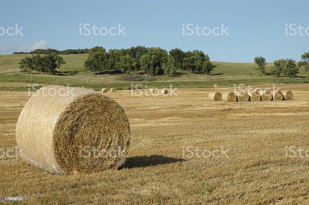 Пшеница Straw Стоковые фото Стоковая фотография