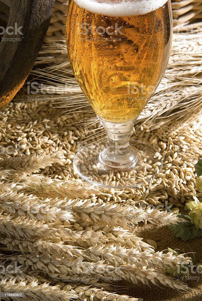 wheat with beer stock photo
