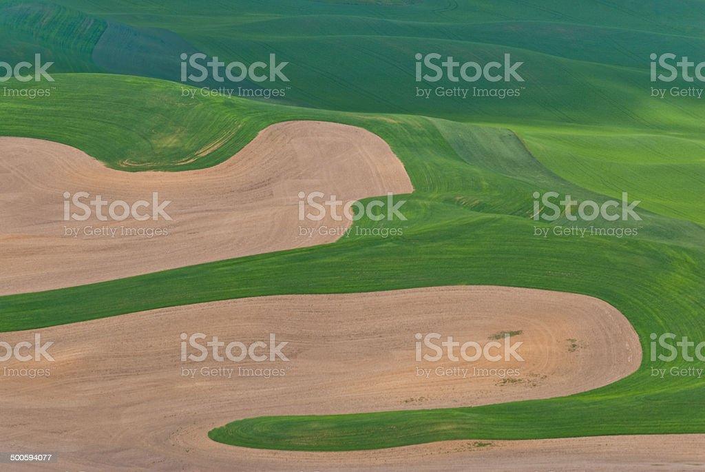 Wheatfield Pattern royalty-free stock photo