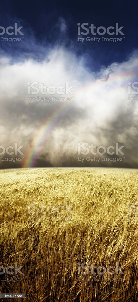 Wheatfield Rainbow royalty-free stock photo