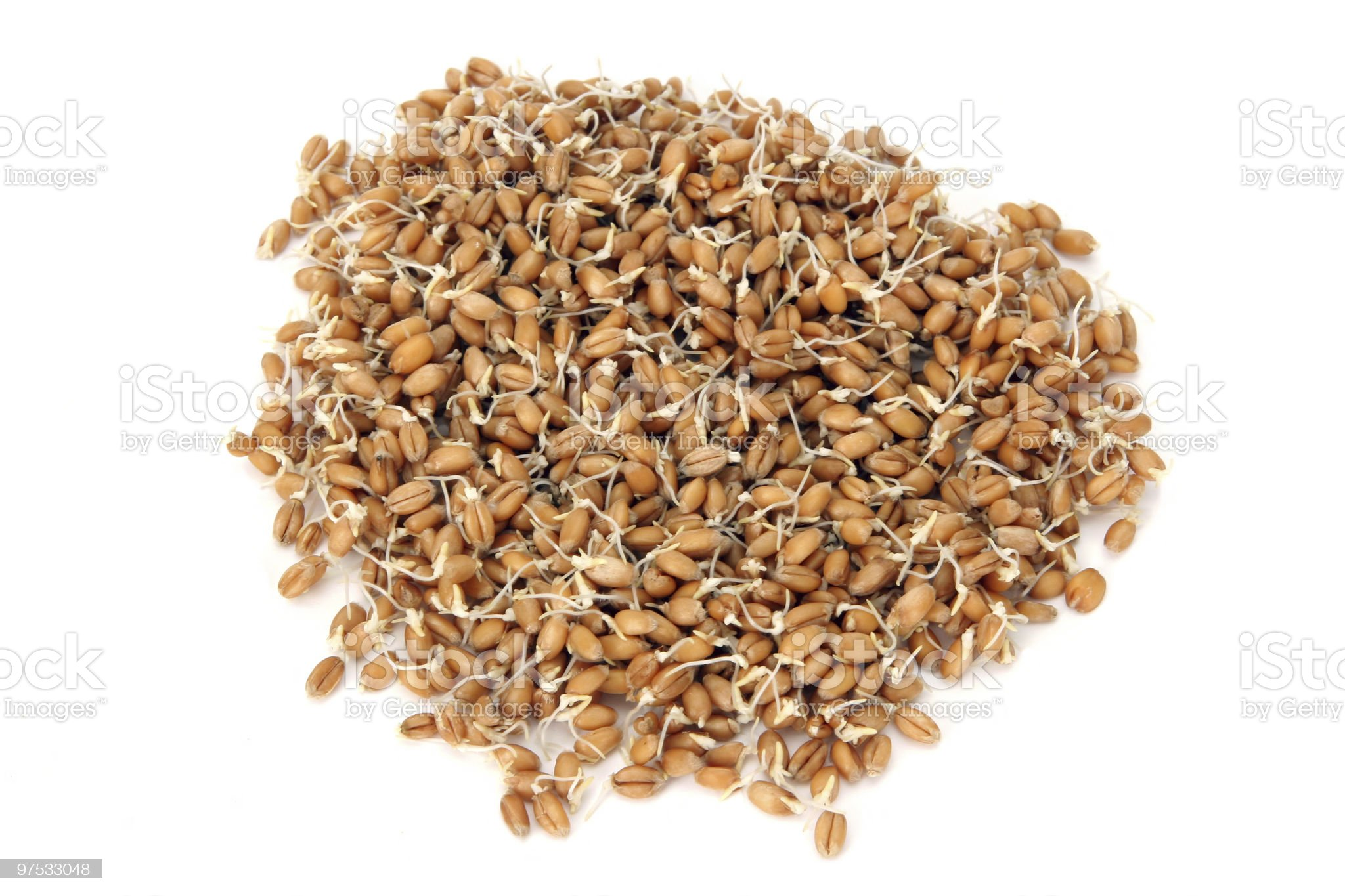 Wheatgerms. royalty-free stock photo