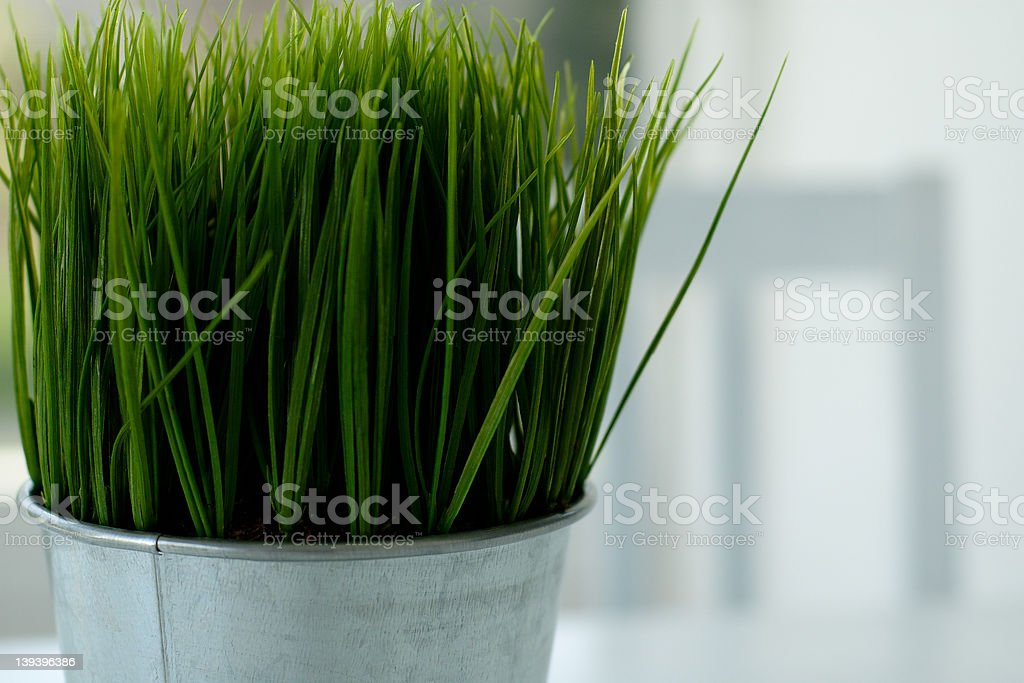 Wheatgrass centerpiece stock photo