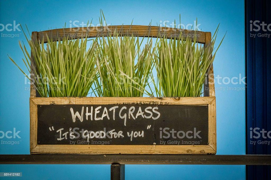 Wheatgrass stock photo