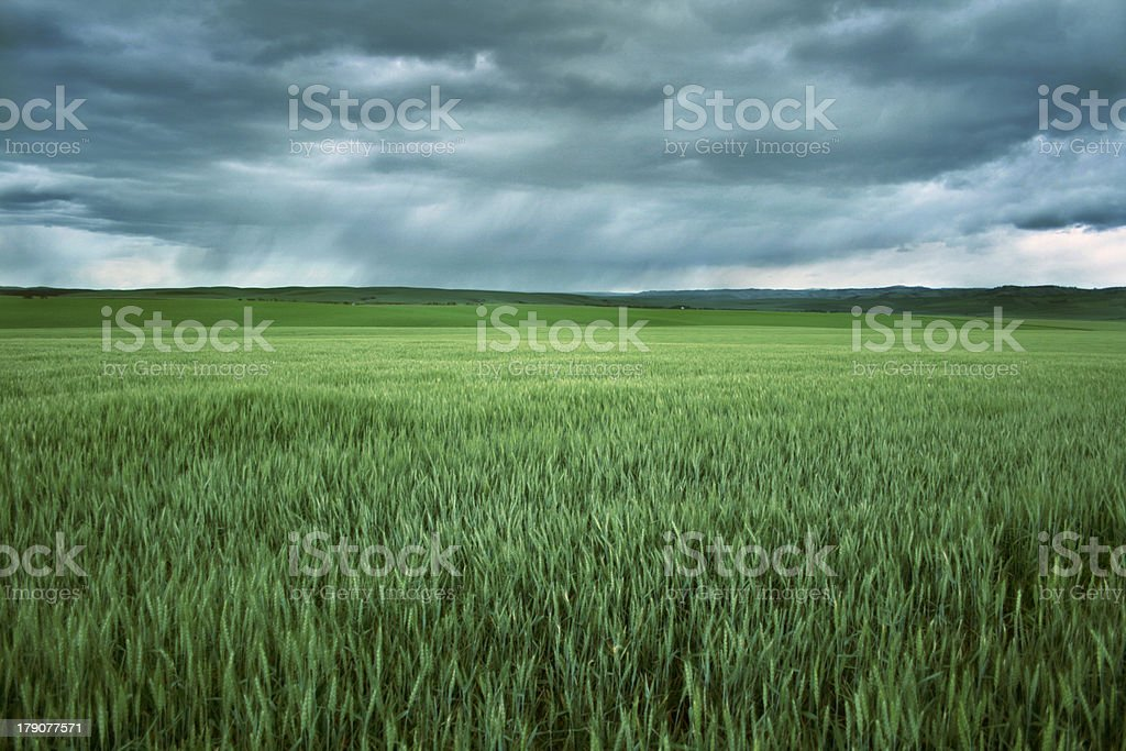 Wheatlands stock photo