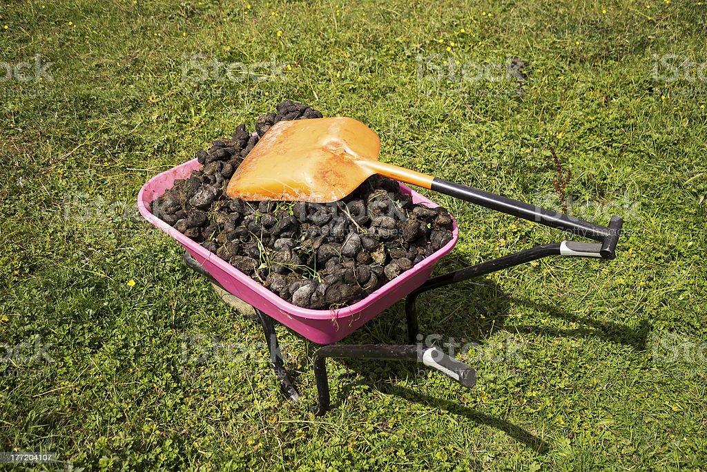 Wheel barrow of horse dung stock photo