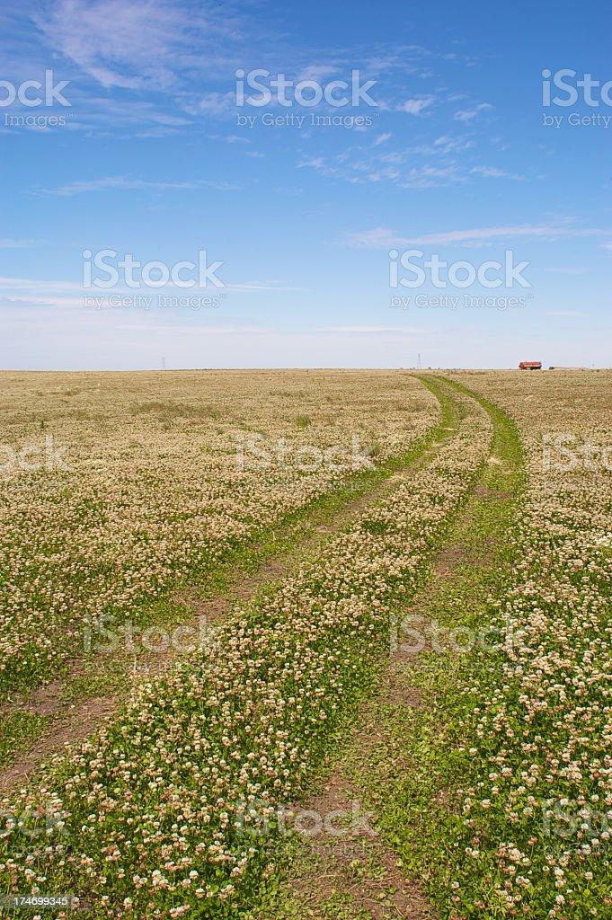 Wheel prints on clover field stock photo