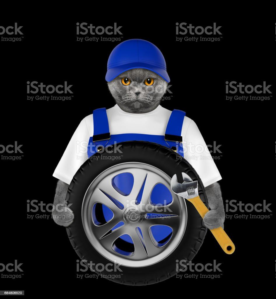 Wheel repair. Cute cat isolated on black stock photo