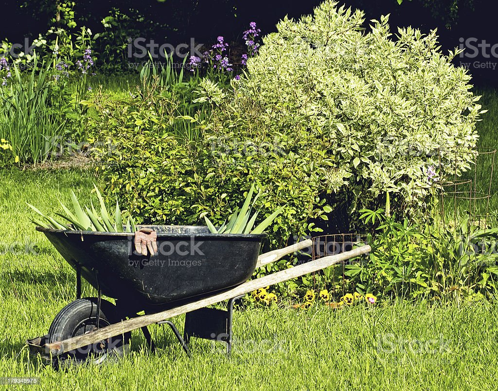 wheel-barrel stock photo