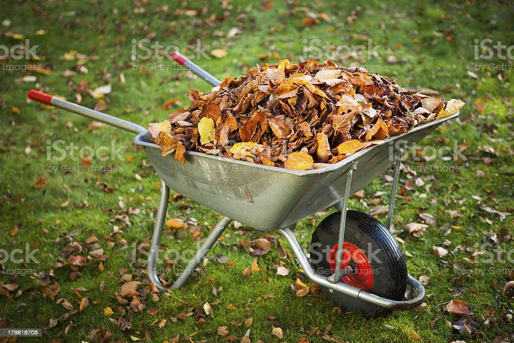 wheelbarrow full of dried leaves stock photo