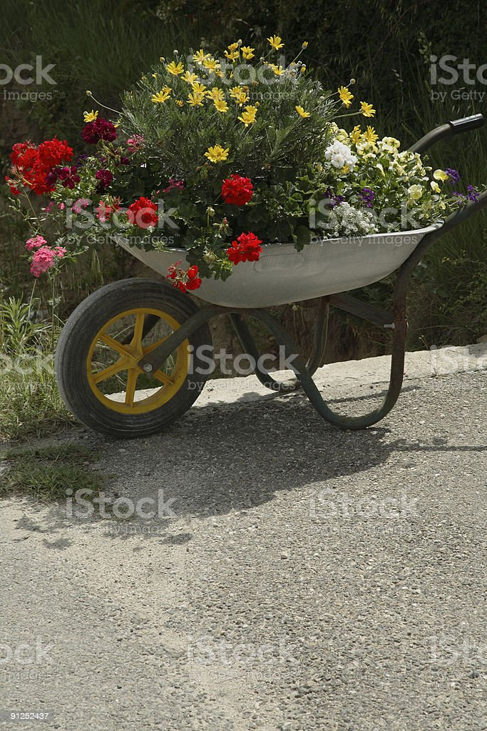 Wheelbarrow Full of Flowers stock photo