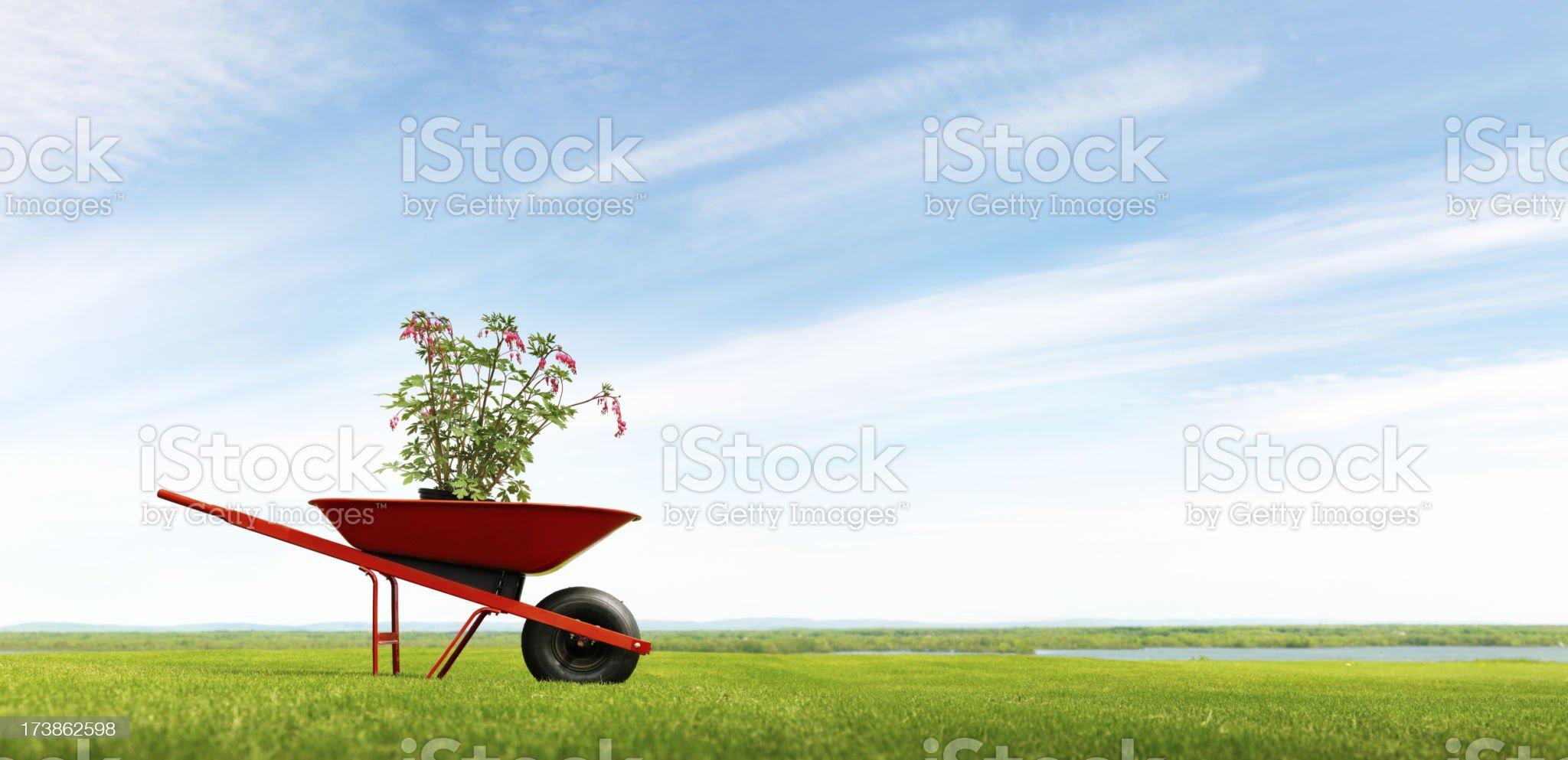 Wheelbarrow in a field royalty-free stock photo