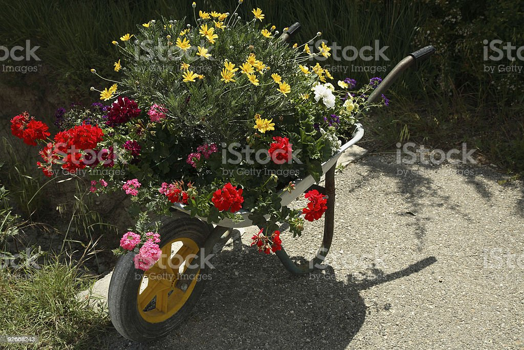 Wheelbarrow of Flowers stock photo